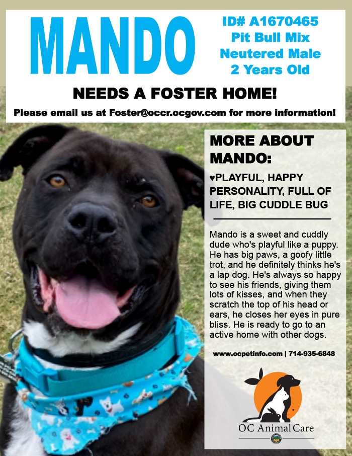 Pet of the Week - Mando - 04.03.2020
